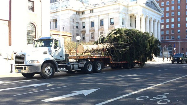 New Haven's Christmas Tree arrives in downtown. (WFSB file photo)