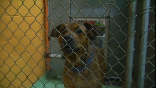 The water creepedin ever so close to six dogs inside the Meriden Humane Society. (WFSB)