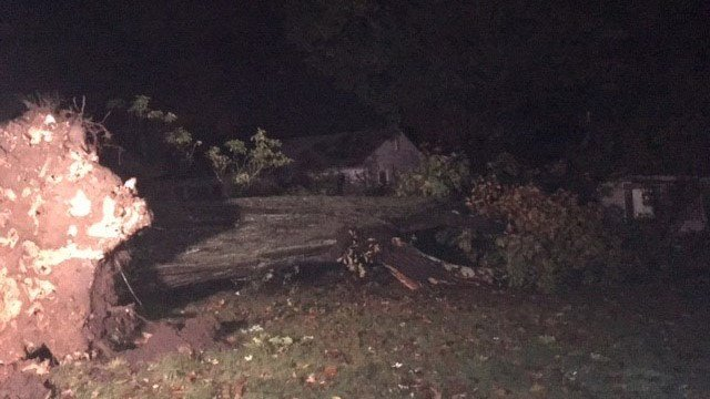 A large tree came down onto a home on Greenwood Drive in Manchester. (WFSB)