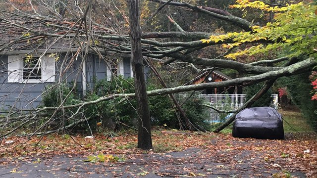 A tree came down on a South Windsor home while a homeowner was sleeping on Sunday night. (WFSB)