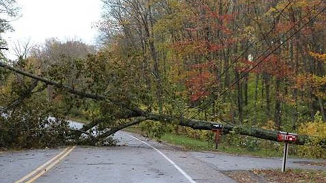 New London Turnpike in Norwich was closed on Monday morning due to a downed tree on some wires. (Norwich Public Utilities)