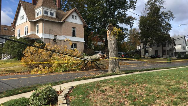 A tree was down on Goodwin Street in Bristol on Monday. (WFSB)