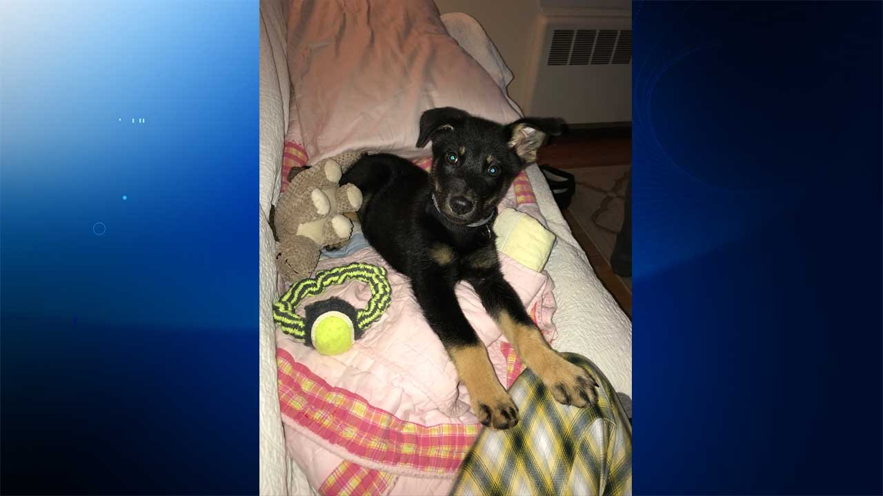 Guinness the dog was stolen from a yard on North Main Street in West Hartford, according to his owners. (Kerry Kearney)