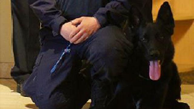 K-9 Casus Belli received a protective vest. (East Hartford Police Department)
