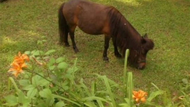 This horse named Savannah was attacked and killed by a bear in Southbury this weekend. (Frank Moon)
