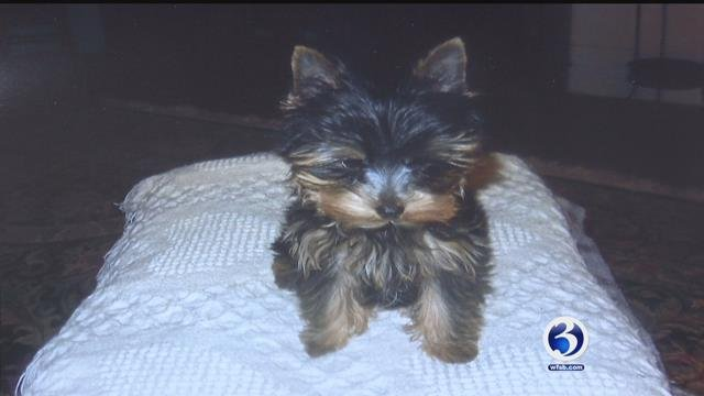 The Barrows said their 4-year-old dog named Lizzie died a couple of weeks back after was bitten bit by another dog. (WFSB)
