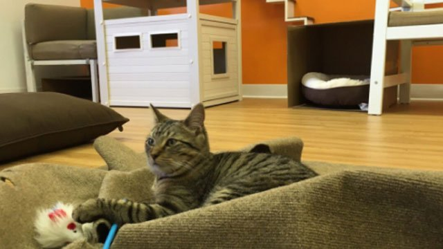 First cat cafe opens in Connecticut. (WFSB)