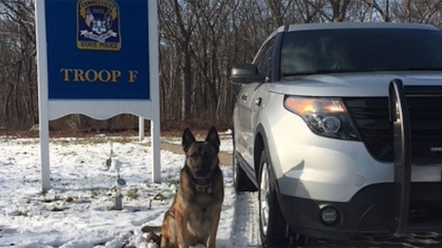 K9 Nero helped locate a missing 7-year-old child. (@CT_STATE_POLICE)