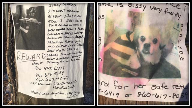 The family believes their service dog was stolen out of their yard (WFSB)