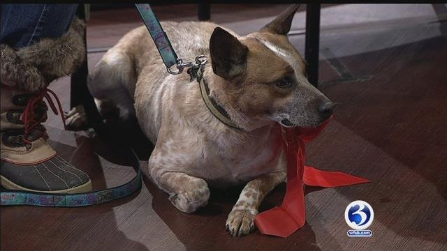 Abby the healing dog is available for adoption