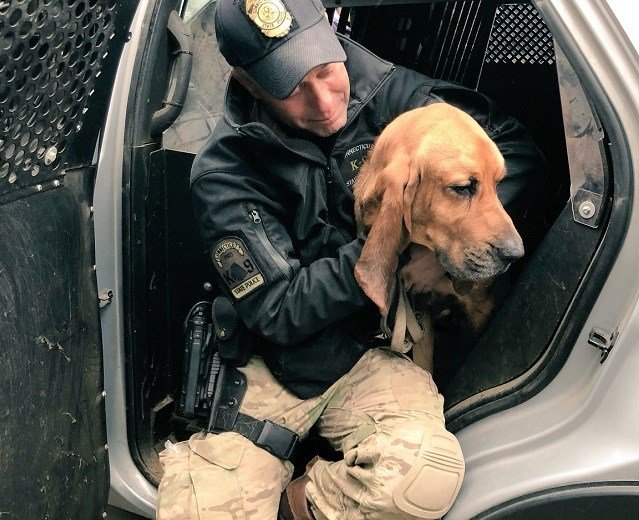State police bloodhound lost in Danbury woods is recovered