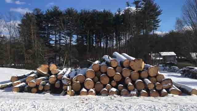 Neighbors were shocked to find trees cut down this weekend (WFSB)