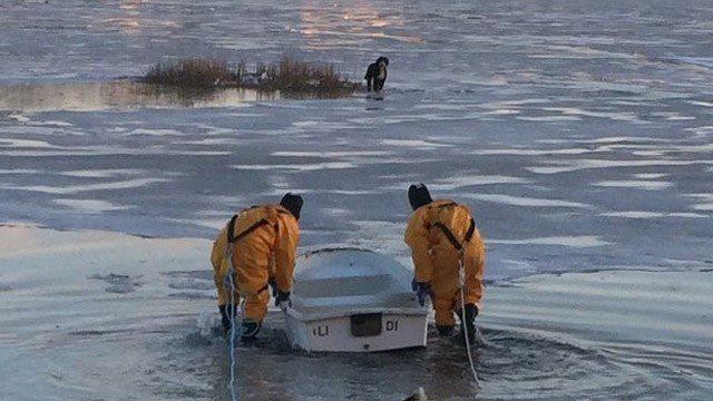 Firefighters in Darien rescued a dog from the ice of the Five Mile River on Tuesday. (Darien Fire Dept.)