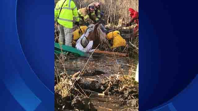 Crews worked to rescue a horse in Killingly on Sunday (Submitted)