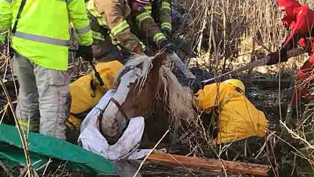 A horse that was stuck in the mud in Killingly has died (South Killingly Fire Department)
