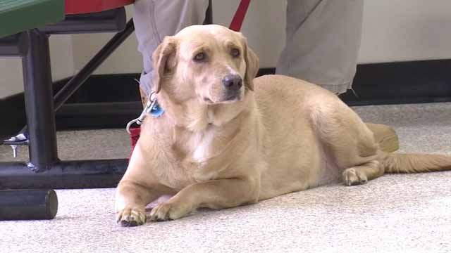 Dog flu is highly contagious and more active than years past (WFSB)