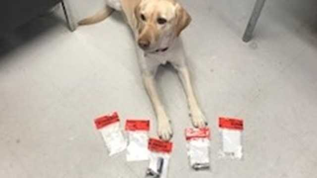 CSP seized heroin and prescription drugs with the help of K9 Yodel. (Connecticut State Police)