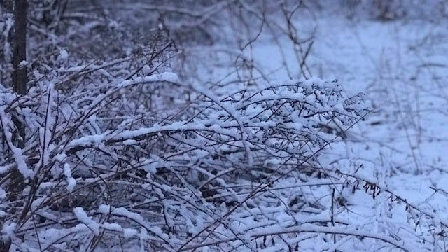A picturesque snow fell in Canton on Friday. (WFSB)