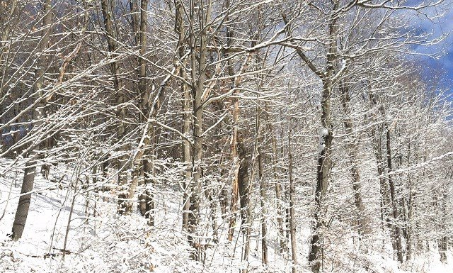 A beautiful photo of Saturday's snowfall from Jim Meehan in North Cannan. (WFSB)