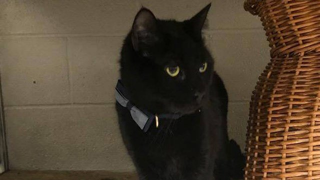 """""""Sparky"""" the cat was found tied to a dumpster in West Hartford's Wolcott Park. (West Hartford Animal Control)"""
