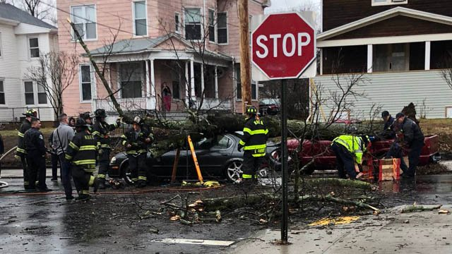 A tree fell on a car on Poplar and Lombard streets in New Haven on Friday. (@djtay203/iWitness photo)