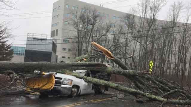 A UConn Health worker suffered minor injuries after this tree fell (iwitness)