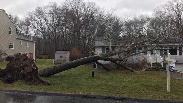Reports of downed trees are coming in from all over the state (East Lyme Public Safety)