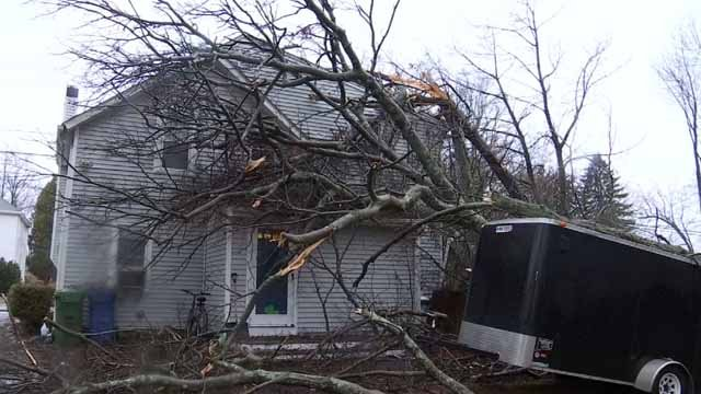 A tree fell on a house in East Hampton on Friday (WFSB)