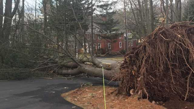Fallen trees have caused thousands of power outages across the state (WFSB)