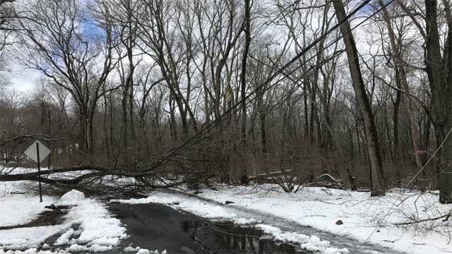 Winter Storm Elsa brought trees and wires down across the state (WFSB)