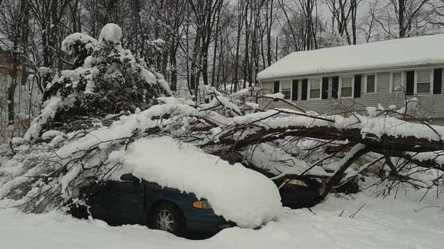 Winter Storm Elsa brought trees down all over the state Wednesday night (Chris Kawecki)