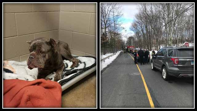 Stormy was rescued from a storm drain in Wolcott on Thursday (Wolcott Dog Pound)
