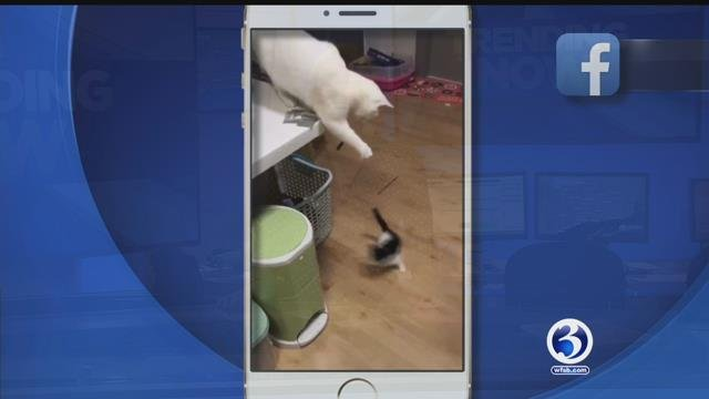 Animals steal food, Lego snow blower, cat plays with kitten