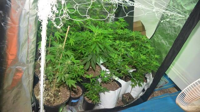 Westport Police bust marijuana grow operation (Westport Police Department)