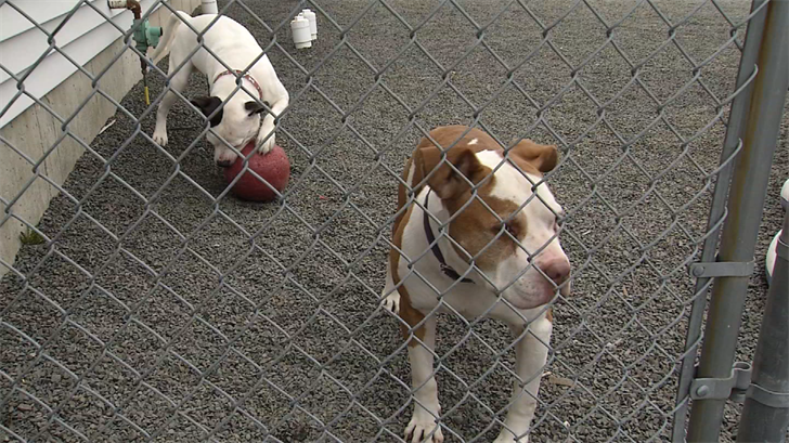 Wallingford dogs looking for forever home together (WFSB)