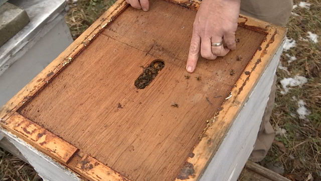 Ten beehives were stolen from a local farm in Avon (WFSB)