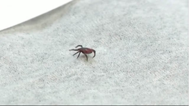 Tick season is around the corner (WFSB)