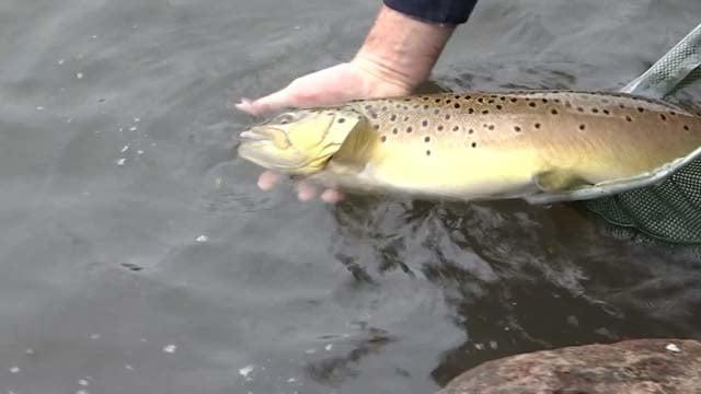 Fishing season kicks off saturday with new regulations for Ct fishing license