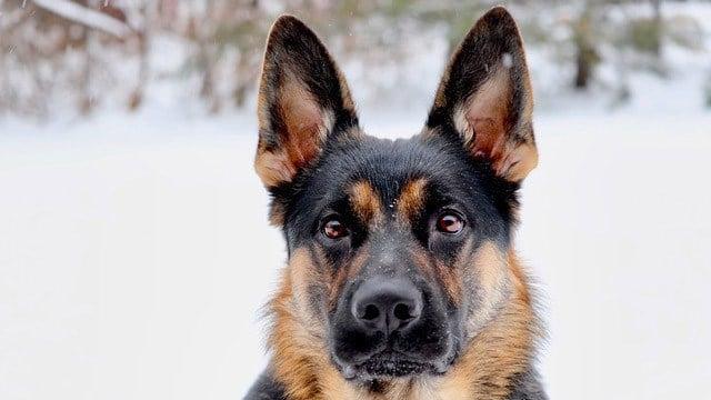 Arlo the dog. (Ashley Sakelarakis)