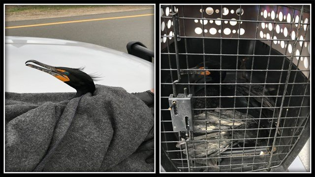 A bird was hit by a truck on Route 8 (Connecticut State Police)