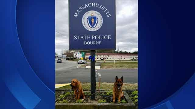 K9 Texas (bloodhound) and K9 Ale traveled to Massachusetts (CT State Police)