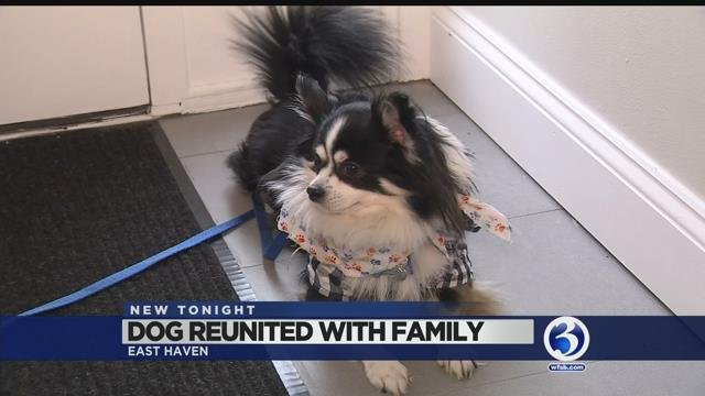Video: Dog returned to owners after more than two years