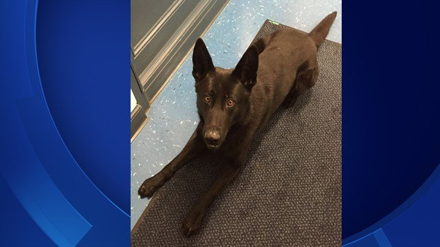 State Police K9 Erol passed away unexpectedly (CT State Police)