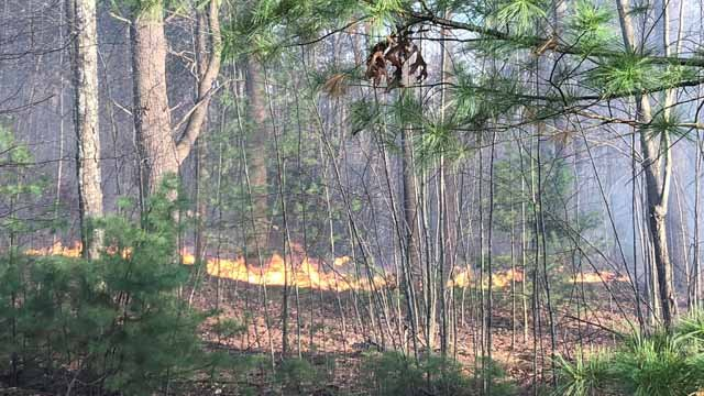 Crews put out a brush fire at Case Mountain on Wednesday (Jeff Troutman)