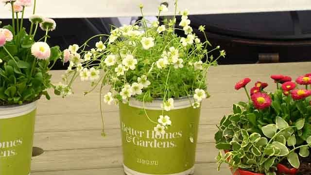 Better Homes & Gardens has a new line of plants and more at Walmart (WFSB)