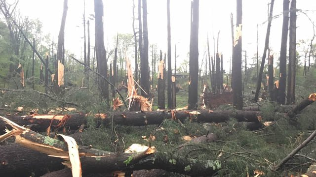 Damage photographed at Sleeping Giant State Park in Hamden following Tuesday's storms. (Sarah Dennison/iWitness)