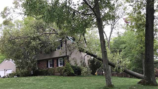 Trees toppled onto homes in Cheshire on Tuesday (WFSB)