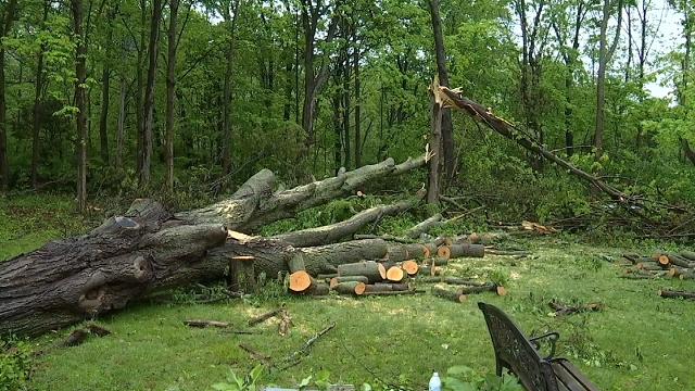 So many of the trees and branches that were toppled on Tuesday are too big for most people to move on their own, and require hiring a contractor. (WFSB)