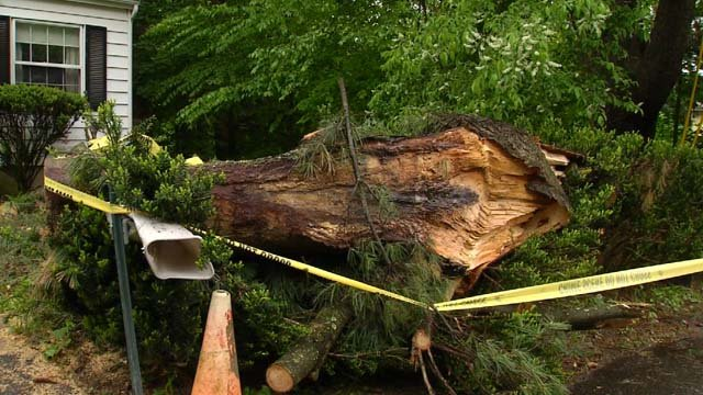Neighbors are trying to figure out who owns this tree that fell (WFSB)