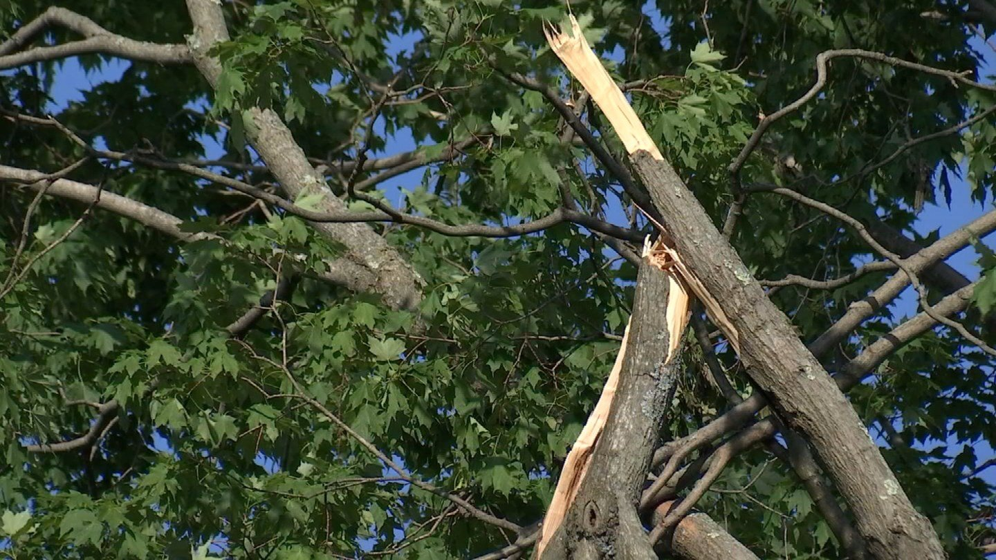 Jeffrey Baker said a tree belonging to the town of Wallingford is leaning on his home, but the town won't take responsibility for its removal. (WFSB)